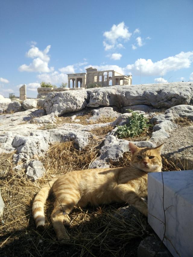 gato de la Acrópòlis