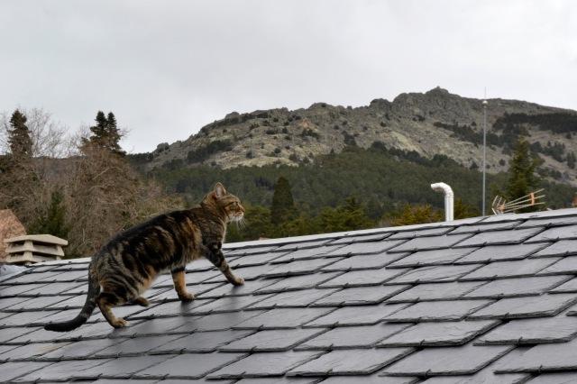 Gato en tejado de mi casa