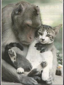 sociabilizacion gato 1