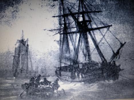 ballena bacaladeros