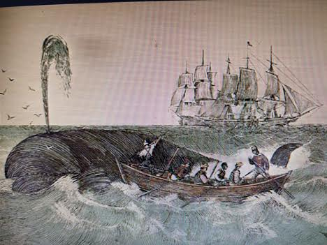 ballena chalupa 4