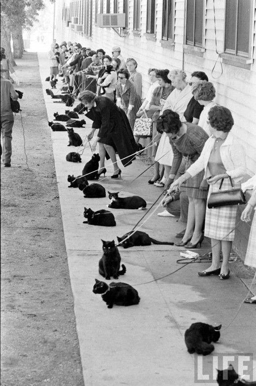 casting gatos negros 3