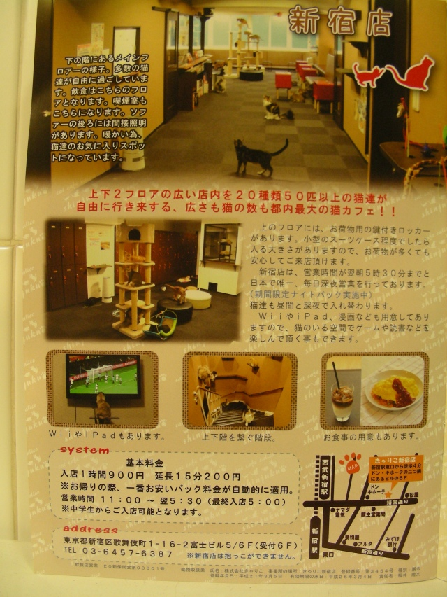 catalogo cat cafe 2