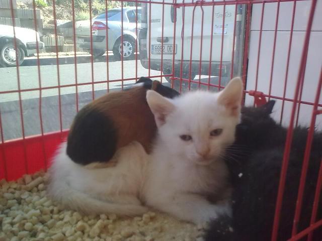 gatito con cobayas 4