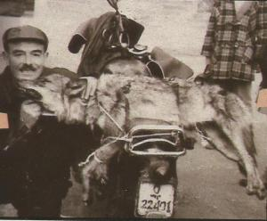 lobo caceria santander 1957
