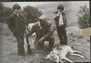 lobo cazado 1954 reg Abriac Francia