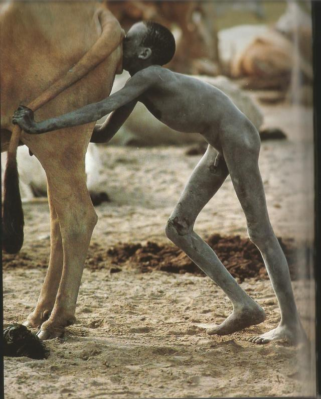 soplado vaginal de las vacas Dinkas