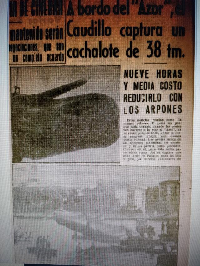 cachalote de Franco