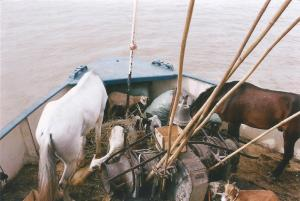 Mali. rio Niger animales en proa