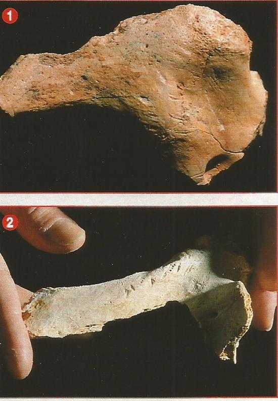 canibalismo Homo antecessor y cromagnon