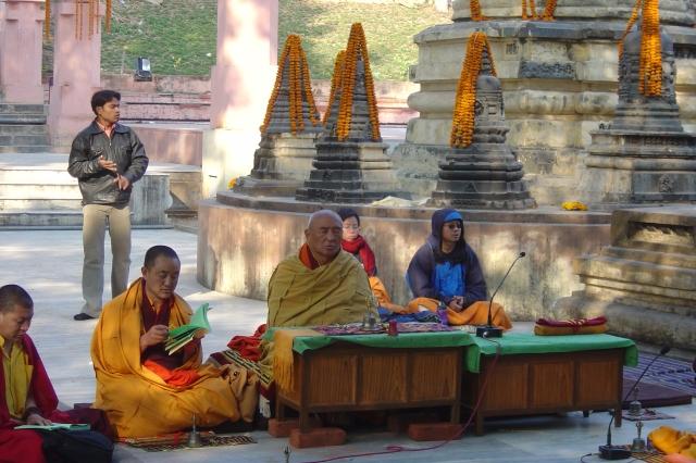 Arboles singulares. Templos y monjes
