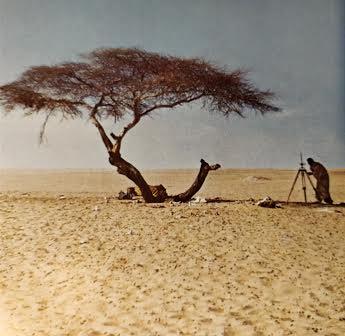 Árbol del Teneré 1970