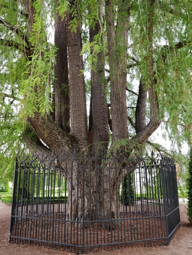 Árboles míticos A
