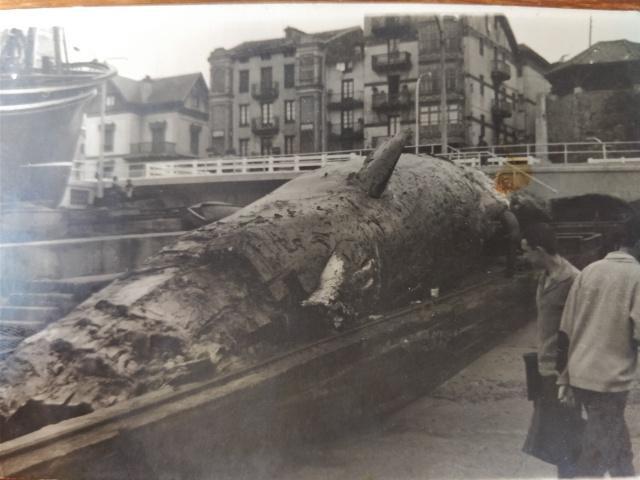 El cachalote de Franco en Bermeo