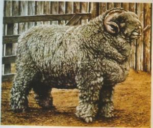 Pastoreo la lana0002