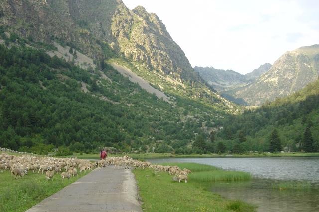 Pastoreo Pirineos