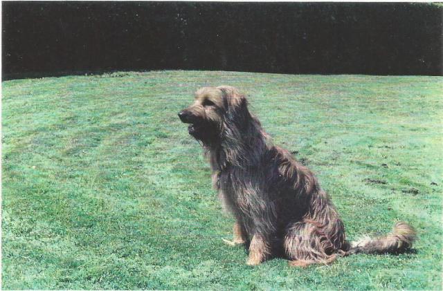 Perros gos d'atura0004