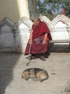 Perros India 3