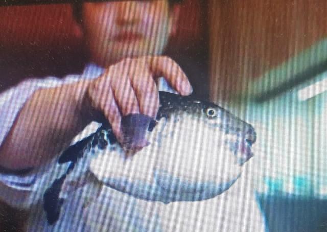 pez fugu